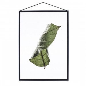 Floating Leaves Poster A3