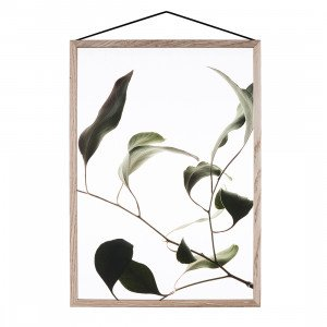 MOEBE Floating Leaves Poster A2